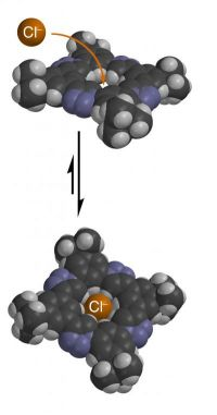 Uncharged organic molecule can bind negatively charged ions