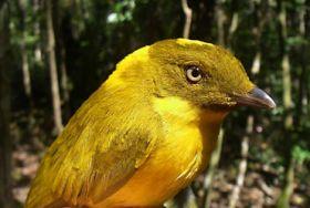 Warming world holds new threats for Aussie wildlife