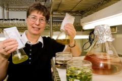 Whether brown or red, algae can produce plenty of green fuel