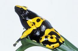 Biodiversity loss weakens global development