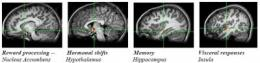 Brain emotion circuit sparks as teen girls size up peers