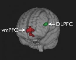 Caltech researchers pinpoint the mechanisms of self-control in the brain
