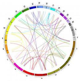 Jumping genes, gene loss and genome dark matter
