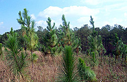 Long-Term Effects of Carbon Dioxide on Plants Studied by ARS