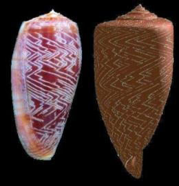 Mollusks taste memories to build shells