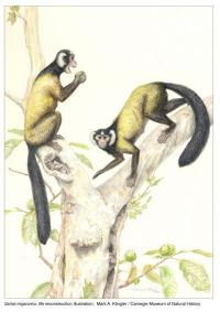 New fossil primate suggests common Asian ancestor, challenges primates such as 'Ida'