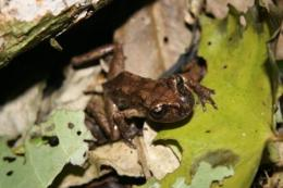 Research reveals old timers in the frog world