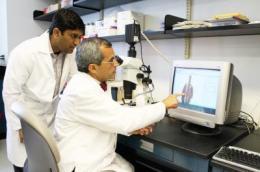 Scientists link immune system's natural killer cells to infant liver disease