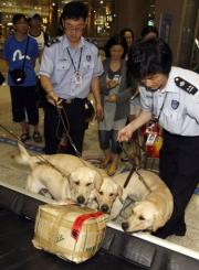 South Korean customs officials handle cloned sniffer dogs checking baggage at Incheon International Airport