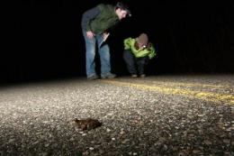 Volunteers help salamanders avoid roadway massacre (AP)