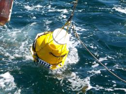 Researchers Use New Acoustic Tools to Study Marine Mammals and Fish