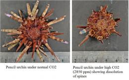 Acid test: Study reveals both losers and winners of CO2-induced ocean acidification