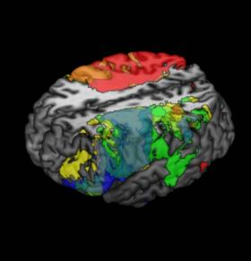Neuroscientists map intelligence in the brain
