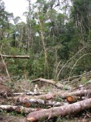 Tropical forests affected by habitat fragmentation store less biomass and carbon dioxide