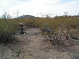 Warming climate chills Sonoran Desert's spring flowers
