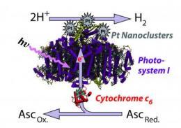 Researchers turn algae into high-temperature hydrogen source
