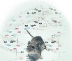 Biologists identify the molecular basis of high-altitude adaptation in mice