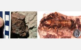 Climate Change Triggered Dwarfism in Soil-Dwelling Creatures of the Past