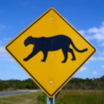 Probing Question: What are wildlife corridors?