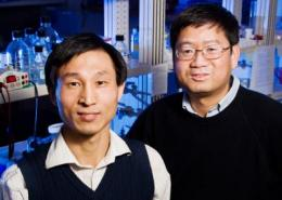 Researchers discover a new pathway that regulates inflammation