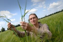 DNA of ancient lost barley could help modern crops cope with water stress