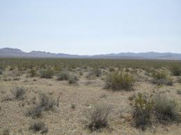 Climate Change, Nitrogen Loss Threaten Plant Life in Arid Desert Soils