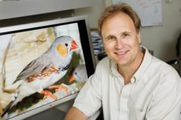 Researchers see evidence of memory in the songbird brain