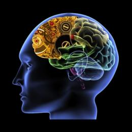 Neuroscientists find neural stopwatch in the brain