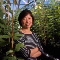 Study finds new relationship between gene duplication and alternative splicing in plants