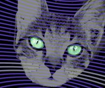 Quantum cat's 'whiskers' offer advanced sensors
