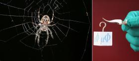 Power thrust for spider silk
