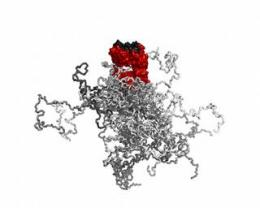 Researchers prolong the half-life of biopharmaceutical proteins