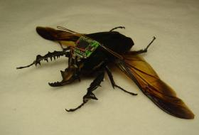 Cyborg beetles to be the US military's latest weapon