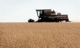 A farmer harvests his soybean crop near Ottawa, Illinois