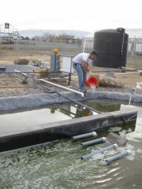 Algae Harvest