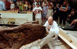 A paleontologist works on 65 million-year-old Tyrannosaurus Rex