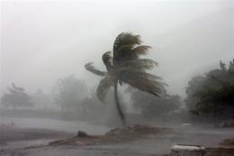 A palm tree is hit by winds near the beach in La Ceiba, Honduras