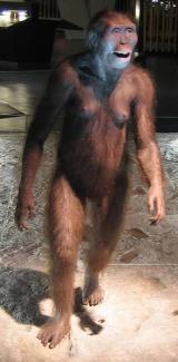 Australopithecus afarensis, 'Lucy'