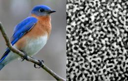 Bird Feathers Produce Color Through Structure Similar to Beer Foam