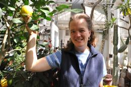 CALS genomicists aim to save citrus from 'greening'