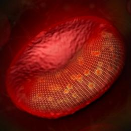 Chemical energy influences tiny vibrations of red blood cell membranes