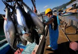 Chicken of the sea? Tuna farming getting a boost (AP)