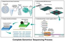 Complete Genomics publishes in Science on low-cost sequencing of 3 human genomes