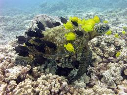 Coral reefs inspire rare consensus -- just save them
