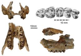 Discovery of the oldest known elephants relative