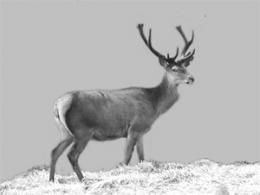 DNA analysis uncovers the prehistory of Norwegian red deer
