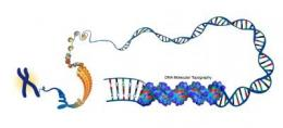 DNA Molecular Typography