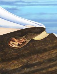Down Under dinosaur burrow discovery provides climate change clues
