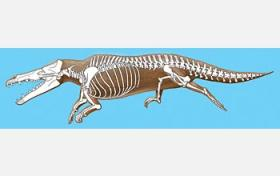 Early whales gave birth on land, fossil find reveals