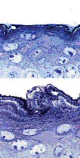 Epigenetic mark guides stem cells toward their destiny